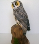 Long_Eared_Owl_4f833c735f088.jpg